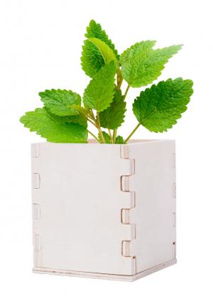 Verslo dovanos Merin (mint herb pot)
